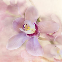 Orchidee / 2 by Heidi Bollich