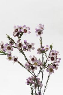 Flowers / 5 von Heidi Bollich