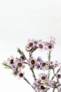 Flowers / 11 von Heidi Bollich