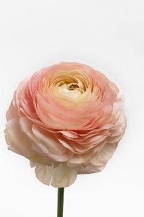 Flowers / 3 von Heidi Bollich