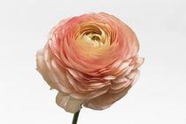 Flowers / 2 von Heidi Bollich