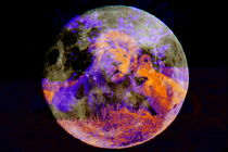 Lion Love over the Moon - DigiArt 1 by thula-photography