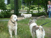 Hund-Trilogie von Pia Roth