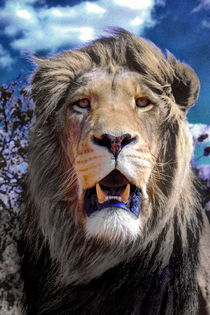 King Lion 5082 digiart by thula-photography
