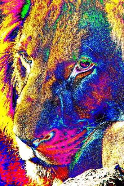 Lion-portrait-pop-thula-art-2520-4500x6750