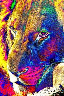 Lion Portrait POP thula-art 2520 by thula-photography