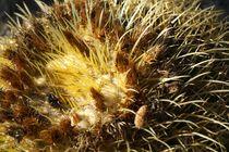 Kaktus by Bruno Schmidiger