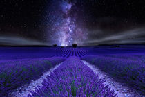 Under the star von Jorge Maia