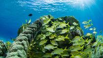 Sealife Curacao by Sascha Caballero