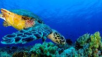 Turtle on the Reef von Sascha Caballero