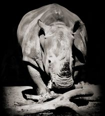 Rhinoceros Portrait von O.L.Sanders Photography