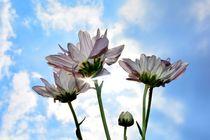 Sonnige Blüten von Claudia Evans