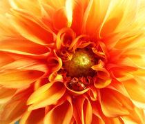 'Dhalie w.Ladybug' von Huanita Zimmermann