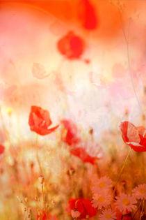 Leuchtend rot  von Bastian  Kienitz
