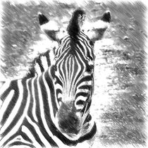 Digital Painting Zebra von kattobello
