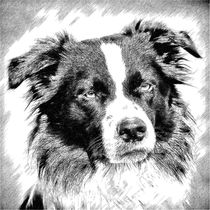 Digital Painting Border Collie 2 von kattobello