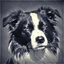 Digital Painting Border Collie 1 by kattobello