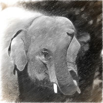 Digital Painting Elefant von kattobello