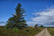 Landschaft mit Baum by Iris Heuer