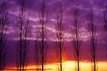 Popular Trees by Jim Corwin