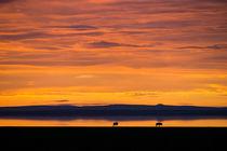 African sunrise by Pieter Tel