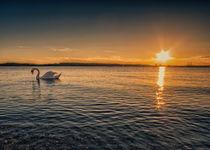 Swan by Andreas Plöger
