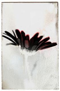 Blütenblattbrüchig von Bastian  Kienitz