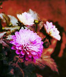 Dalien - farbig by maja-310