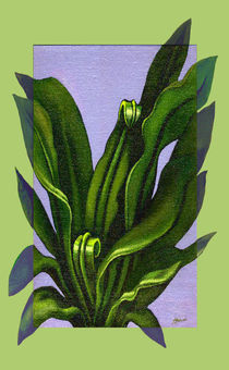 Birds Nest Fern by Patricia Howitt