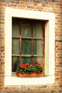 Fensterbild - 1 von maja-310