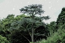 Sternenhimmel von maja-310