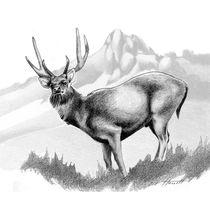 Rusa Deer 1 by Patricia Howitt