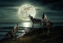 Wölfe beim Vollmond am Wasser by Thomas Stracke