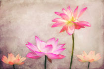 Lotus by AD DESIGN Photo + PhotoArt