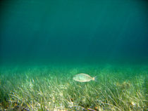 Underwater von leemoon