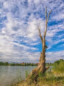 Der alte Baum auf der Insel Reichenau - Bodensee by Christine Horn