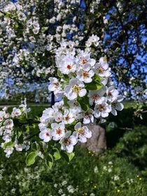 Frühling pur von Uwe Ruhrmann