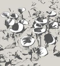 Lillies by David Bishop