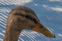 Ente vor dem Teich von Thomas Sonntag