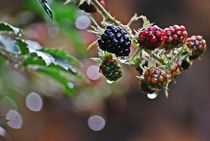 Brombeeren-Phantasie... by loewenherz-artwork
