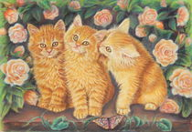 Cats and Roses  by Alessandra Rosi