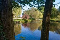 Alsterpark im Frühling von Thomas Sonntag