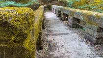 The path.. by Yohan Dochev