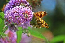 Distelfalter auf Schmetterlingsflieder... 3 by loewenherz-artwork