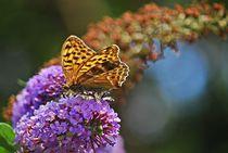 Distelfalter auf Schmetterlingsflieder... 2 by loewenherz-artwork