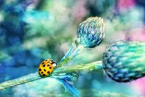 Ladybird in blue von Claudia Evans