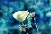 Butterfly in blue von Claudia Evans