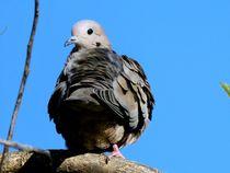 Dove in the tree von Ricardo De Luca