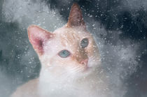 Counting Snowflakes by Elisabeth  Lucas