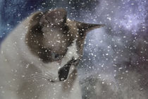 Watching Snowflakes by Elisabeth  Lucas
